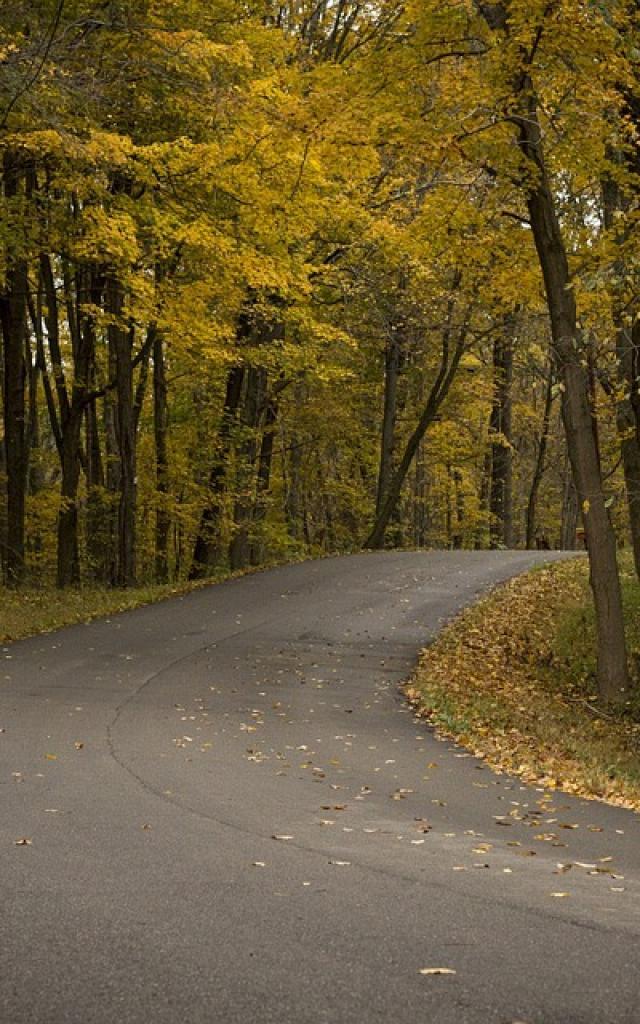 Route dans les bois