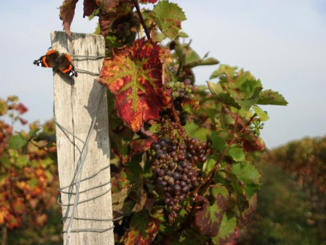 Vignobles Coteaux du Vendômois