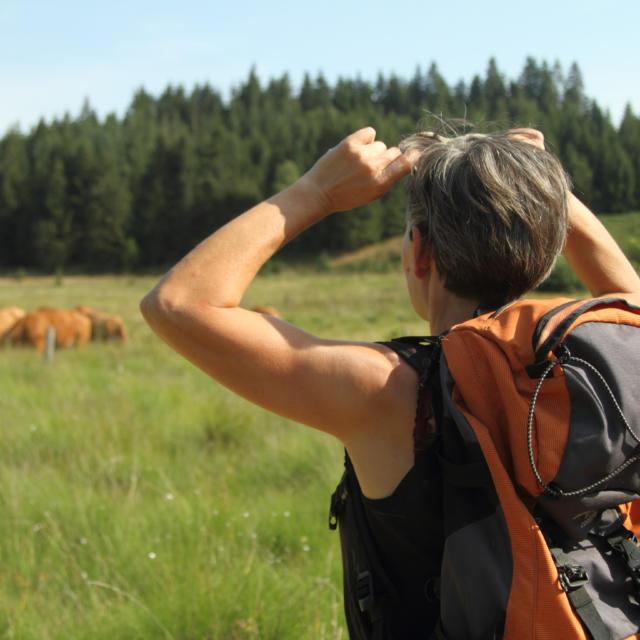 Randonneur Plateau De Millevaches