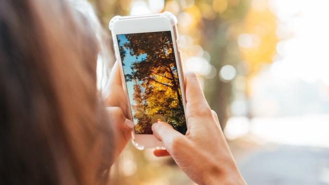 Photo d'un arbre en automne