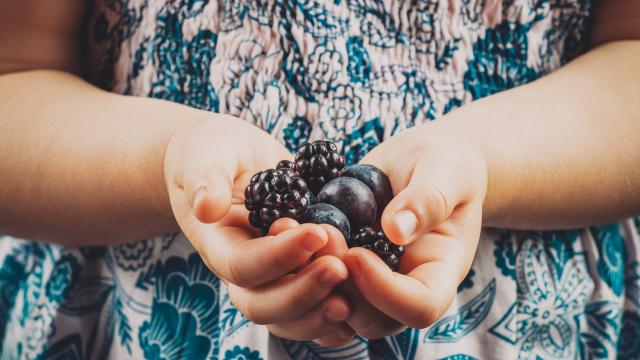 Small child hands holding blueberries and blackberries closeup. Image has vintage filter applied