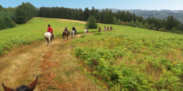 Ferme Equestre Trephy Chaumeil (12)