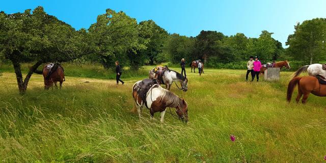 Ferme Equestre Trephy Chaumeil (5)