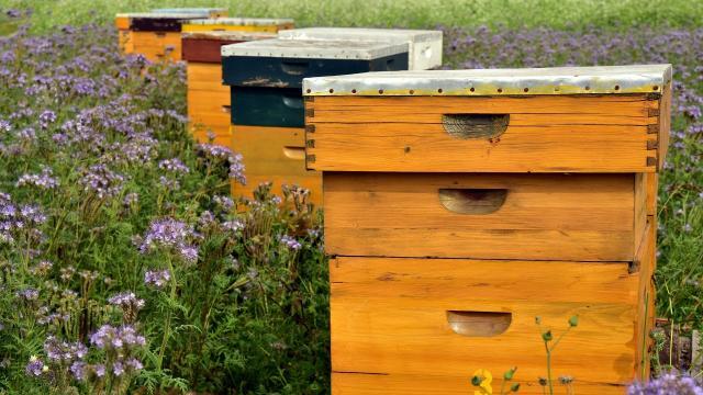 Beehive 3703426 1920 ©pixabay