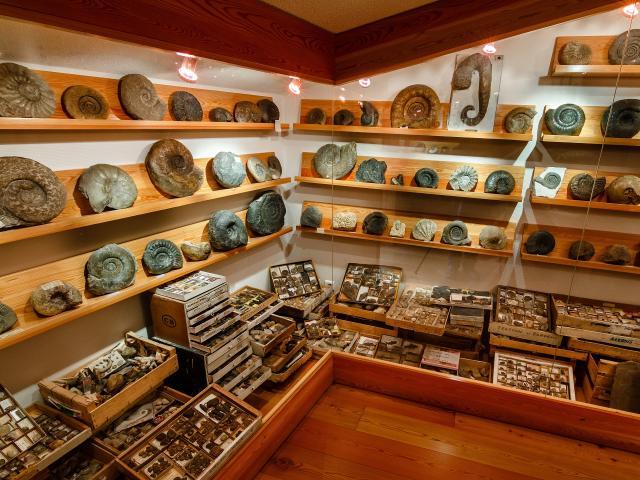 Exposition fossiles Barrême