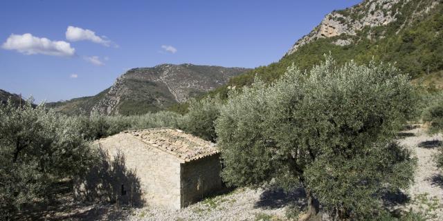 oliveraie-buis-les-baronnies.jpg