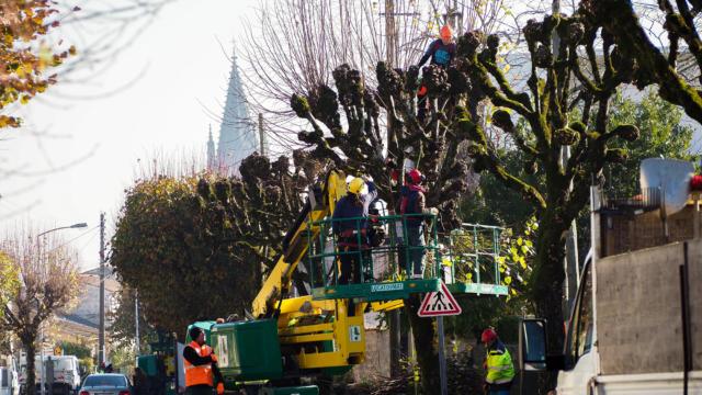 Taille et élagage des arbres