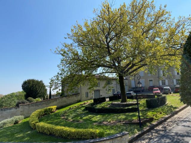 Place Du Capitole Chêne Pédonculé