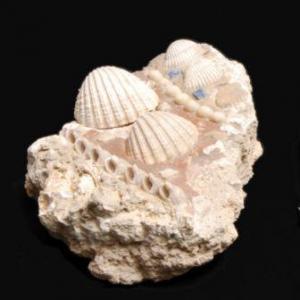 Musée Bleu Egyptien 2